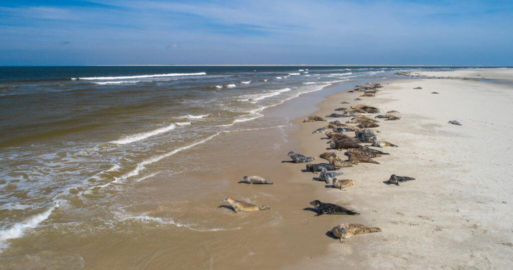 Zeehonden Texel - Zeehonden in de zee