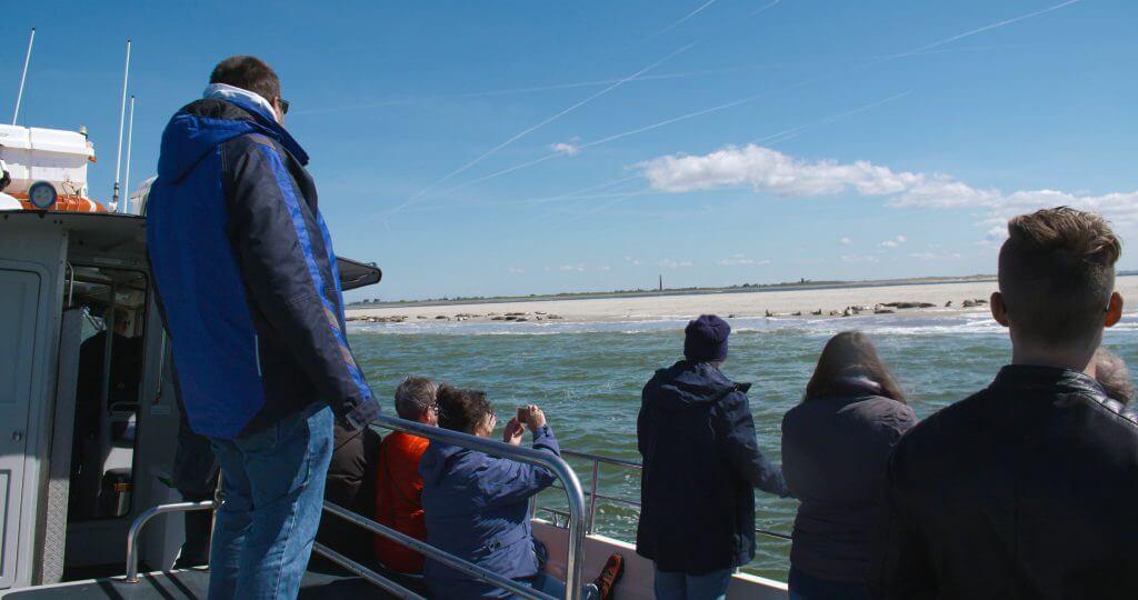 Zeehonden Texel - Zeehonden tocht Texel