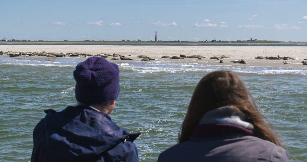 Zeehonden Texel - Zeehondentochten Texel